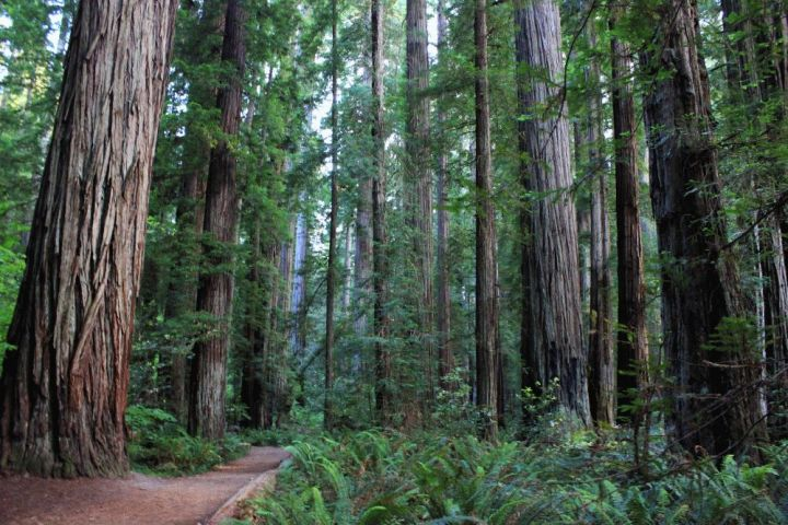 nuovosito_sequoiagrove_2