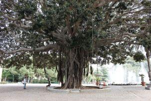 Titolo: Lo scarto. Luogo: Giardino Inglese, Palermo.