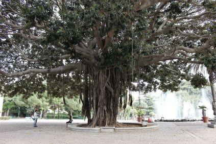 Arborgrammaticus ~ Lo scatto. Luogo: Giardino Inglese, Palermo.