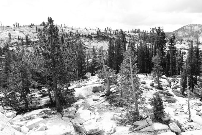 hr_fratus_california_juniperus_olmsteadpoint_3_redux
