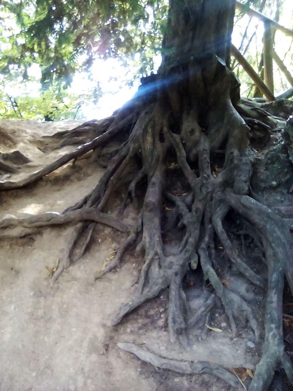 treviso_alberi_fratus