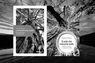 Il sole che nessuno vede & Il sussurro degli alberi ~ Ediciclo[2013-2016]