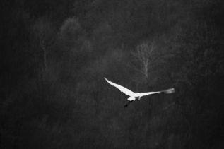 Poesia ~ Un'opera in versi fra umanità e natura. Libri, traduzioni,eventi
