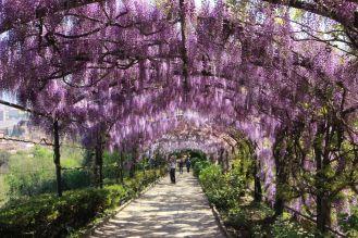 Arborgrammaticus ~ Titolo: Fioriture. Luogo: Giardini di Villa Bardini, Firenze.