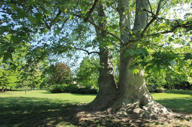 Arborgrammaticus ~ Titolo: Il vulcano. Luogo: Parco di Villa Litta, Milano.