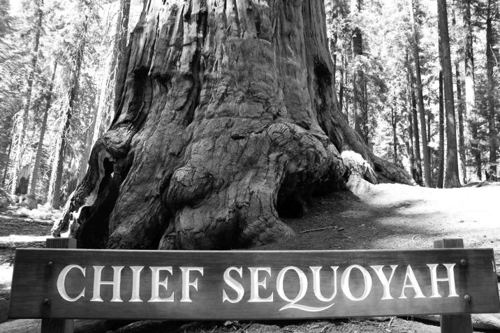 color_2013_snp_giantforest_chiefsequoia_bn_redux