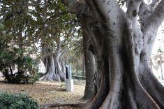 Titolo: In fila australiana. Luogo: Striscia botanica, Lungomare Falcomatà, Reggio Calabria.