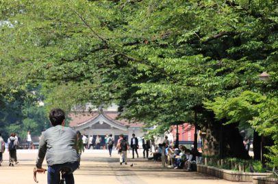 Titolo: Il ciclista. Luogo: Parco di Ueno, Tokyo.