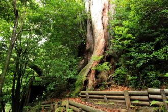 Arborgrammaticus ~ Titolo: Il piede. Luogo: Shiratani Unsuikyo Ravine, Yakushima National Park, Giappone.