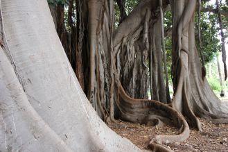 Arborgrammaticus ~ Titolo: La lingua. Luogo: Giardino Garibaldi di Piazza Marina, Palermo.