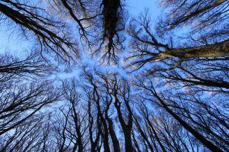 Arborgrammaticus ~ Titolo:Ideogrammi. Luogo: Faggeta monumentale del Monte Cimino.