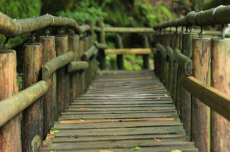 Titolo: Ordine. Luogo: Shiratani Unsuikyo Ravine, Yakushima National Park, Giappone.