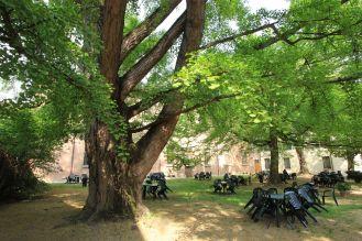 Arborgrammaticus ~ Titolo: L'ospite straniero. Luogo: giardino di Palazzo Paradiso, Ferrara.