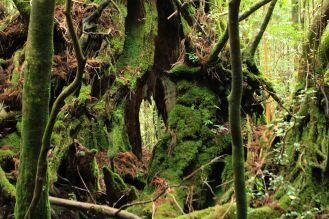 Titolo: Non c'è spazio per il dubbio. Luogo: Shiratani Unsuikyo Ravine, Yakushima National Park, Giappone.