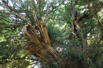Arborgrammaticus ~ Titolo: Radici urbane. Luogo: Lungomare Falcomatà, Reggio Calabria.