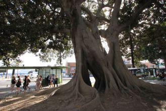Arborgrammaticus ~ Titolo: La grande N. Luogo: Giardino di Piazza Matteotti, Cagliari.