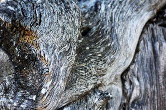 Arborgrammaticus ~ Titolo: Materia. Luogo: itinerario dei ginepri turiferi di Saint-Crepin, Francia.