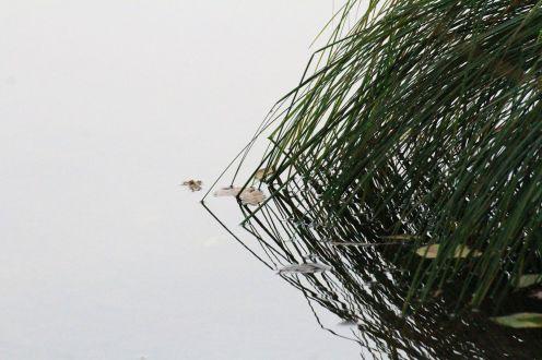 Arborgrammaticus ~ Titolo: Non è l'occhio a comandare la notte. Luogo: Riserva naturale dei laghi di Avigliana.