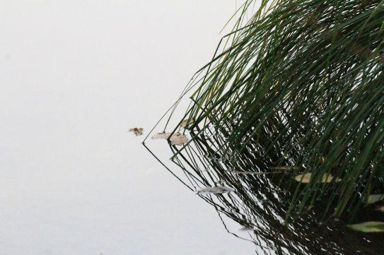 Titolo: Non è l'occhio a comandare la notte. Luogo: Riserva naturale dei laghi di Avigliana.