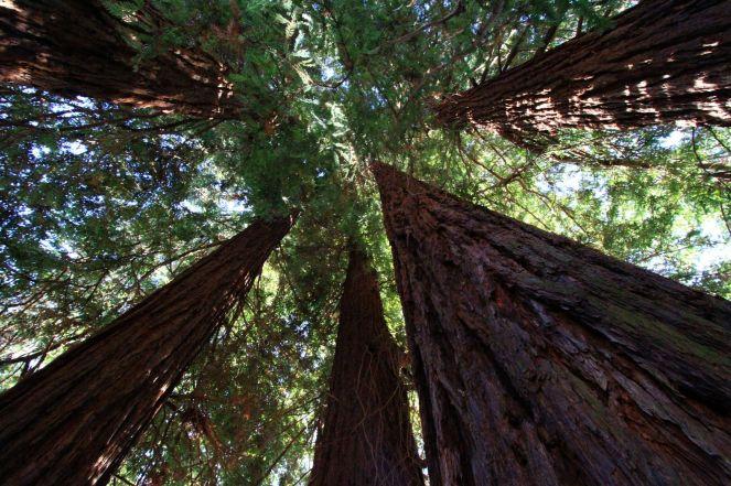 Arborgrammaticus ~ Titolo: Le cinque sorelle. Luogo: Riserva naturale del Parco Burcina, Pollone (BI).