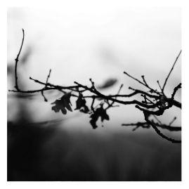 fratus_autunno_wh_redux