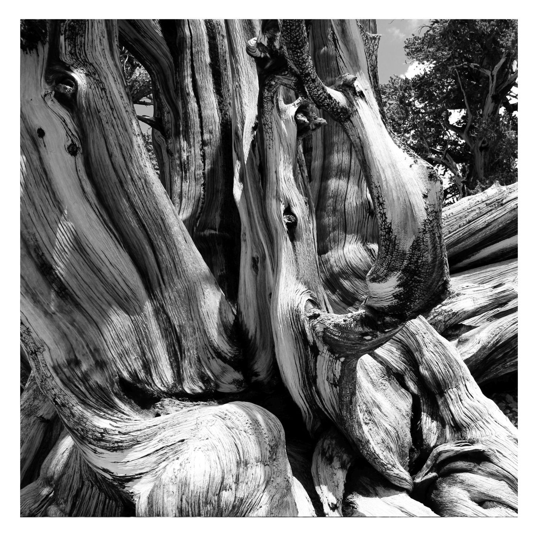 arancia albero velocità datazione