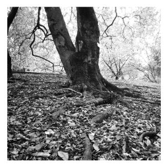 fratus_magnoliakobus_verbania_wh_redux