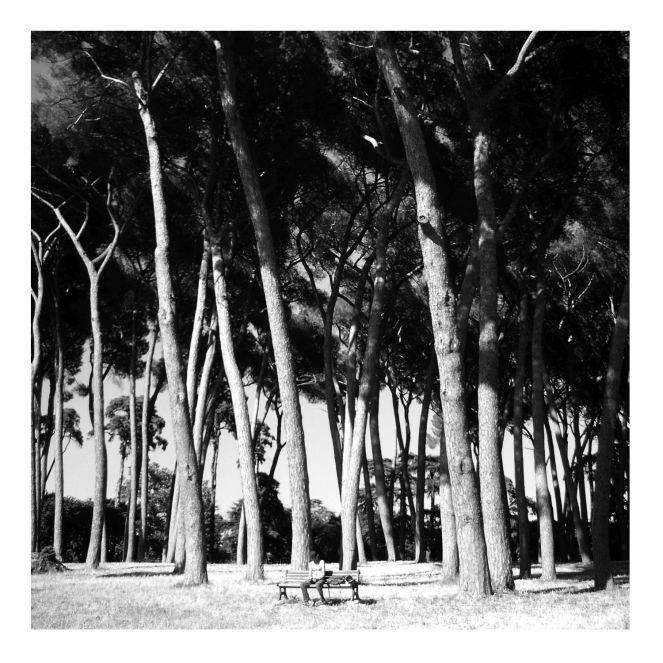 fratus_roma_vintage_wh_redux
