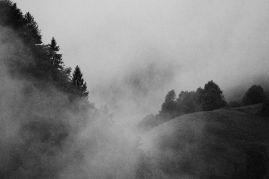Grandi alberi della Bergamasca ~ Boschi della Val Seriana
