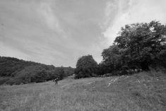 Grandi alberi della Bergamasca ~ Costellazione dei faggi del Monte Menna