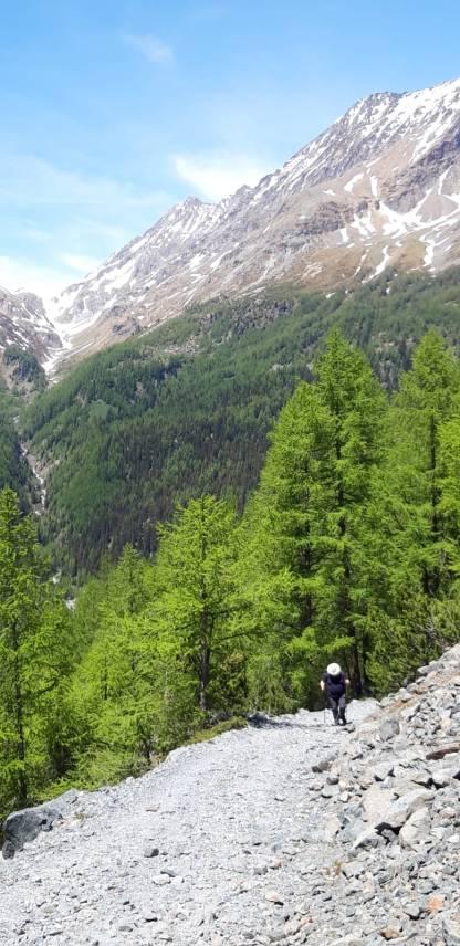 In cammino fra le alpi, alla ricerca di millenari