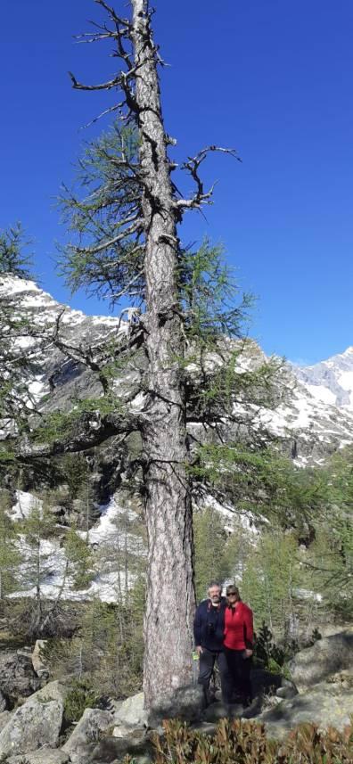 In visita al larice millenario dell'Alpe Ventina