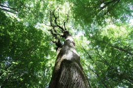 In Foresta Umbra