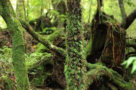 L'isola-foresta di Yakushima