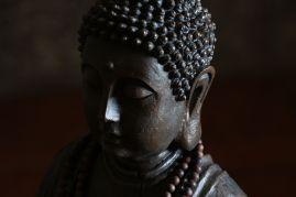 A detail of Sequoia-Buddha