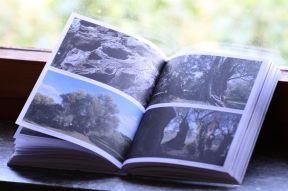 Fotografare i grandi alberi